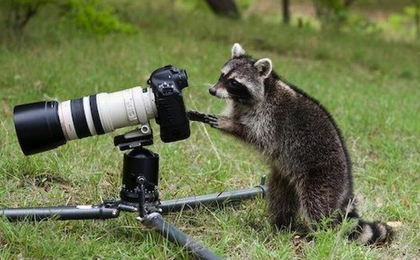 animal-photographers-11